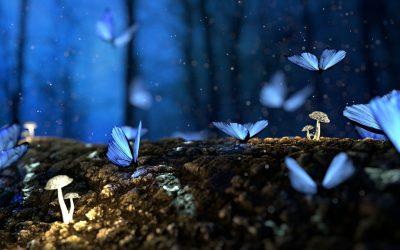 La mariposa azul (relato colaborativo Covid edition)